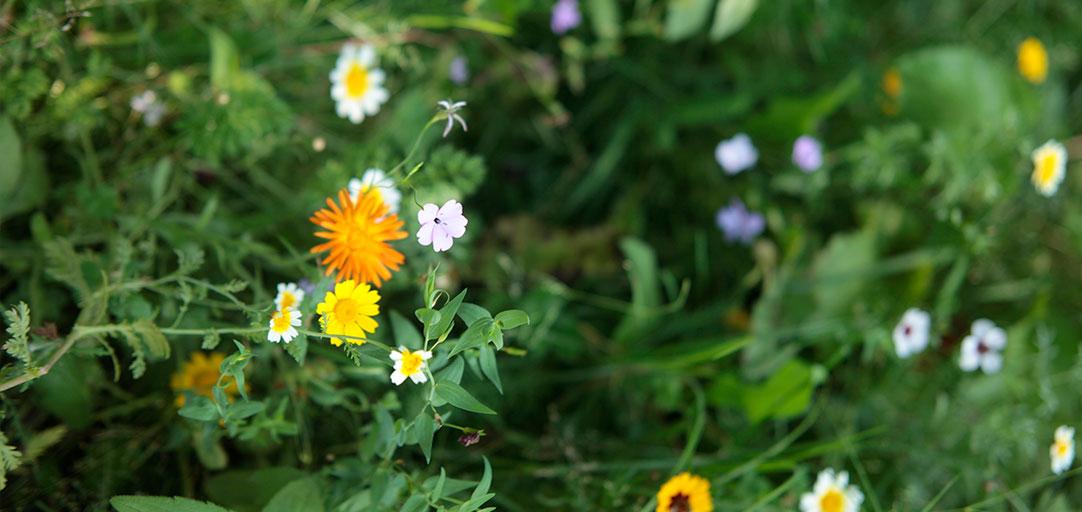 QuellGARTEN Lichtenau – Blumenwiese